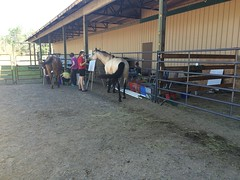 NWP-Horse-Therapy (3)
