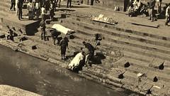 """NEPAL, Pashupatinath,Hindutempel und Verbrennungsstätte, zahlreiche Feuer brennen an den Surya Ghats, 16351/8669 (roba66) Tags: reisen travel explore voyages roba66 visit urlaub nepal asien asia südasien kathmandu pashupatinath """"pashu pati nath"""" """"pashupati """"herr alles lebendigen"""" tempelstätte hinduismus shivaiten tempel verehrungsstätte shiva tradition religion building architektur architecture arquitetura kulturdenkmal monument bau fassade façade platz places urban historie history historic historical geschichte verbrennung burning furnal ghats verbrennungsstätte beisetzung zeremony brauchtum kultur culture blackwhite bw sw branco negro blackandwhite blancoenero blancoynegro monochrome byn bretoebranco einfarbig schwarzweis"""