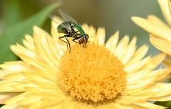 My garden friends (TONY VIKLICKY) Tags: tony viklicky insects flowers greenery garden outdoors nikon d40 6mp canada
