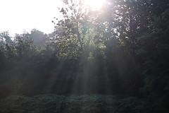 Morning Rays (AmateurTravelerPhotographer) Tags: photography travelphotography abstractphotography naturephotography seasons sunlight morningrays backyardphotography macro hdrphotography landscapephotography beautifulsunlight weather