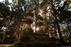 Lanterns (MarieWillPhotographie) Tags: nara 奈良市 kasuga taisha japon lantern sanctuary temple sunlight sunset lumière soleil rayons halo moss mousse forêt