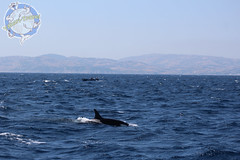 Whale Watching Street of Gibraltar