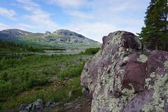 Alep Gierkav with a rock, Stuor Muorkke (Madde Elg) Tags: laponia lapland lappland stuormuorkke storasjöfallet fjäll mountain alepgierkav rock sten