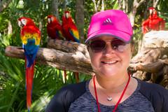 Macaws (Jerry Bowley) Tags: rivieramaya xelha lisa birds ecopark parrots macaws allinclusive