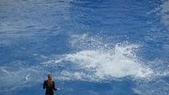 El Oceanográfico. (gerardoirazabalvalledor) Tags: delfines exhibición acuario espectáculo cetaceos dolphins show valencia españa ciudad de las artes y ciencias entrenadores oceanográfico panasonic lumix fz 70 72 fotografía filmación