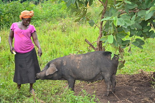Woman pig farmer
