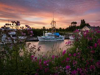 Flowery Sunset