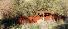 Datsun 200B (Greggiths2013) Tags: datsun bluebird nikon s9700 rusty car auto bush forgoten burnt out orange 200b