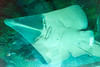 Chinese? :D (tesKing (Italy)) Tags: abudhabi aquarium dubai dubaimall emiratiarabi uae emiratiarabiuniti ae