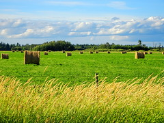 The layers of summer (peggyhr) Tags: peggyhr haybales clouds sky field grasses fence dsc03536a alberta canada trees level1pfr thegalaxy thegalaxystars