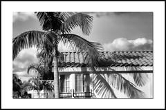 California Dreaming . . . (billackerman1) Tags: california palmtrees bw blackandwhite bordersframes shadows