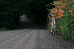 #roadlikethese (koperajoe) Tags: cyclotourisme dirtroad bicycle flowers 650b daylilly botanical backroad daylillies cyclotouring gravelroad