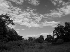 Summer morning (Dendroica cerulea) Tags: meadow sky clouds landscape blackandwhite bw monochrome morning summer ayresbeach redsmarina highlandpark middlesexcounty nj newjersey