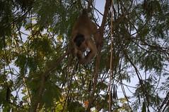 Jataí, Goiás, Brasil (Proflázaro) Tags: brasil goiás jataí parqueecológicodiacuy bosque cerrado parque árvore animal natureza ecologia