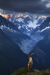 His Kingdom (sven483) Tags: ibex chamonix france goat kingdom sunrise mer de glace