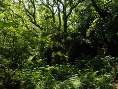 P7020637 (simonrwilkinson) Tags: devon path lustleigh trees lustleighcleave landscape