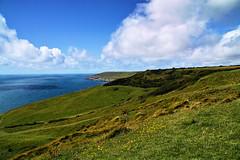 Back in Purbeck (Fr Paul Hackett) Tags: dorset purbeck coast flower hillside sea serene