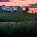 the beet farm thumbnail