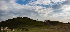 hayal kur (yasar metin) Tags: shepherd life light landscape loneliness last photographer photography photo photographers sky people field grass tree sheep