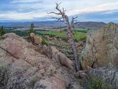 IMGP1877-Edit (Matt_Burt) Tags: hartmanrocks dead lichen rocks tree