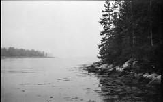shoreline, tidal, ocean, fog, conifer trees, Clark Island, Maine, Ercona II, arista.edu 200, Moersch Eco Film Developer, September 2016 (steve aimone) Tags: shoreline tidal atlanticocean conifertrees reflections fog landscape seascape clarkisland midcoast maine erconaii erconaii105mmf35 folder 6x9 aristaedu200 moerschecofilmdeveloper blackandwhite monochrome monochromatic 120 120film film mediumformat