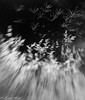 Midsummer Night's Dream - field of dreams series (karenannehutt) Tags: grass grassseed meadow monochrome blackandwhite abstract blur lensbaby movement landscape canon canon5diii composerpro bw surreal surrealism dreamscape dream light