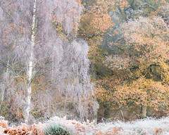 Untitled (Tom_Drysdale) Tags: wood autumn november murthly birnam winter freezing mist frost xt2 fog 2016 fuji fujifilm ice