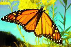 Digital Pastel Drawing of a Monarch Butterfly by Charles W. Bailey, Jr. (Charles W. Bailey, Jr., Digital Artist) Tags: butterfly monarchbutterfly danausplexippus nymphalida lepidoptera usa northamerica photoshop photomanipulation topaz topazlabs topazclarity topazdetail topazdenoise topazimpression alienskin alienskinsoftware alienskinexposure topazstudio on1photo drawing pastel pasteldrawing art fineart visualarts digitalart artist digitalartist charleswbaileyjr