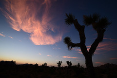Sunset in the Desert (PVA_1964) Tags: d7500 nikon afpdx1020mm joshuatree nationalpark desert california