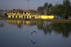 Jataí, Goiás, Brasil (Proflázaro) Tags: brasil goiás jataí parqueecológicodiacuy lago parque ave água natureza ecologia cidade