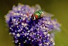 OFF- Arrivederci a Settembre amici miei! - Goodbye in September my friends! (kiareimages1) Tags: flies mouches mosche images imagery immagini insetti insects insectes colors colori couleurs flowers macro macroflowers macrophoto