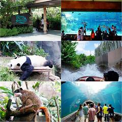 01 (樂活的大方) Tags: 20170724sb 新加坡動物園 river safari