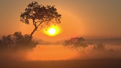 Djuma Private Game Reserve,South Africa (Images by Jeff - from the sea) Tags: sunrise goldenhour trees africa safarilive