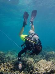 Diver (PacificKlaus) Tags: malapascua visayas cebu philippines underwater ocean nature scuba diving peopleandthesea diver survey