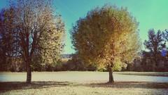 Sécheresse.Été (busylvie) Tags: arbres photoartistique abcédairelettree