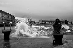 {Stormy.} (aiello_gioioso) Tags: bw trieste streetphotography walkingstreet italy street streetart streetphotographer streetlife bwlover blackandwhite bwphotography sonyalpha sony istillshootfilm film italia streetphotobw candid life vintagelens bnwphotography lensculture sonya6000 manual reportage psyconerd sea sealife seaphoto sail seascape storm stormy overcast water supertakumar 35mm f2 rain rainy monochrome people girl walk walking