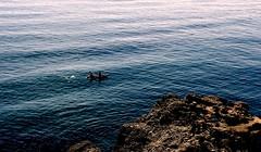 Roca (camus agp) Tags: rocas piraguas mar nerja maro mediterraneo costa agua