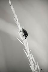 DSC_3124 (Franck.H Photography) Tags: macro insectes araignée coccinelle