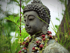 buddha's taste of rain (Ola 竜) Tags: buddha stone sculpture dew raindrops grass macro figure buddhism zen green nature droplets taste mood afterrain bokeh graysky greenleaves foliage lips stones beads necklace dof profile face bust artwork peaceful calm peace art plant waterdrops ears nose detail focus fz200 lowpov pray praying smell smelling tasting water rain drops statue