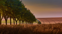 Lines of landscape (flowerikka) Tags: eveningmood field grainfield grass green harvest hill horizon landscape lookhout sky sunset trees view lines germany rural