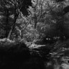 how runs the stream? (Skink74) Tags: 120 6x6 blackandwhite bronica england film filmdev:recipe=8005 hampshire highlandwater infrared infrared400 landscape newforest r72 rodinal rollei s2a s2am081 standdevelopment uk zenzabronicas2a zenzanonmc40mm14 trees summer forest wood stream gravel dry ir mono bw