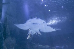IMG_0637 (Lilly Wendel) Tags: newportaquarium newport kentucky usa