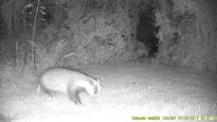 TrailCam370 (ohange2008) Tags: essexgarden july badger cat monkeynuts peanuts trailcam