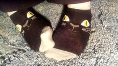 Pussyfotting Around (mistresssocks) Tags: feet foot footwear footfetish socks socksoftheday blacksocks anklesocks daily