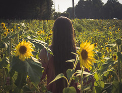 1-01312 (samschuvart) Tags: girl fun sunflower field farm adventure outdoors outside outdoor sony samschuvart sonya6300 a6300 state sunlight sunshine shoot shooting beautiful women