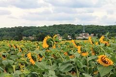 Unknown (past ' Elle) Tags: tournesol église nuages bleu jaune village été picmonkey