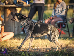 P7151729 (Songdog Studios) Tags: green dog neumond womensretreat 2017 k9 schutzhund ipo