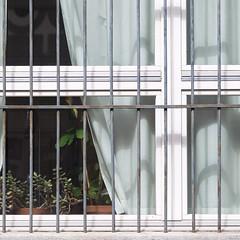 a home is a prison (zeh.hah.es.) Tags: kreis5 zurich zürich schweiz switzerland fenster window rahmen frame gitter grid pflanze plant weiss white schwarz black grün green vorhang curtain orthogonal horizontal vertikal vertical