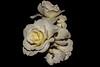 Rose (betadecay2000) Tags: rosen rosengarten beet beete pflanze flower plant plants green grün rosenbusch rosebush dornen dorn blühen rosenstrauch zierpflanze blume blütenblatt outdoor schärfentiefe heiter autofocus i love flckr schwarzer hintergrund