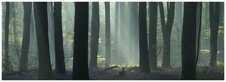 The Mystic Woods - Come and say hello on FB, would love to see you at www.facebook.com/naturallandscapephotographer/